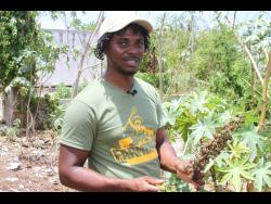 Dave Meikle, a farmer in Clarendon, has expanded his business to the growing of castor beans, which he processes and makes castor oil.Dave Meikle, a farmer in Clarendon, has expanded his business to the growing of castor beans, which he processes and makes castor oil.Dave Meikle, a farmer in Clarendon, has expanded his business to the growing of castor beans, which he processes and makes castor oil.
