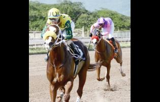 File EXHILARATED, ridden by Dick Cardenas, wins the 5th at Caymanas Park on  November 24, 2018.